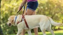 Guide dog image